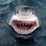 Πανικός στην Κύπρο από καρχαρία