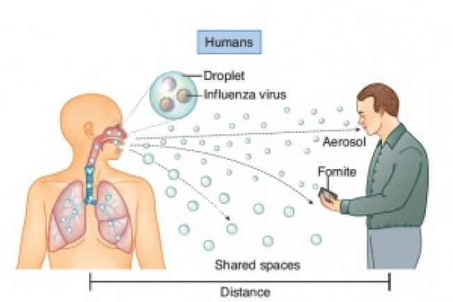 influenza-3