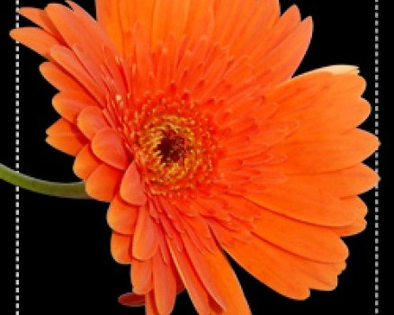 Beautful orange flower