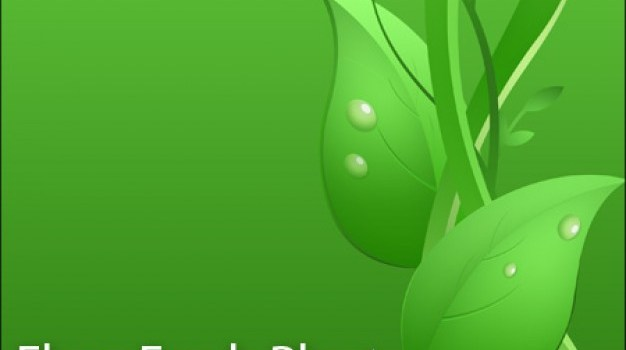 Green Leaves with raindrops PSD