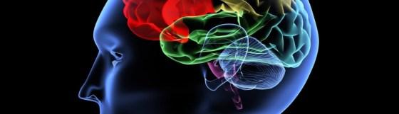 smegenu-liga