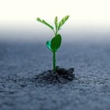 planta-germinando