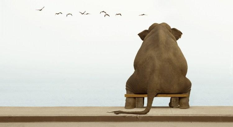 peso das responsabilidades, elefante sentado
