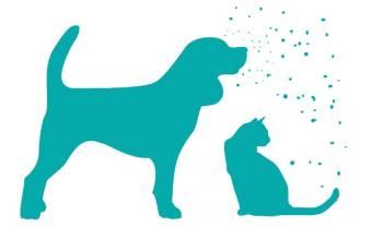 alergias-a-perros-y-gatos