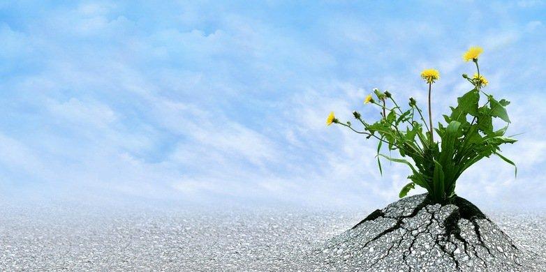 perseverancia-2