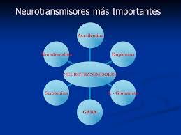 neurotransmisores 8