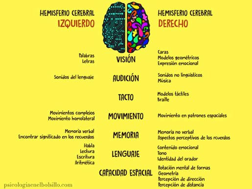 lateralidad cerebral