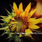 psicologo en mostoles flor