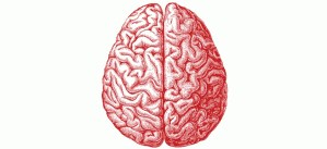 ¿Cómo funciona nuestro cerebro? (Vídeo)