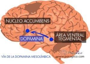 adiccion cerebro vía
