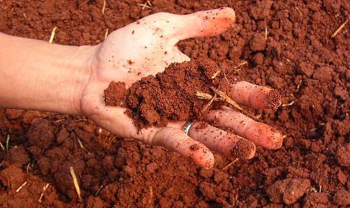toprak yemeden duramıyorum! - vibiraem gazon dlya glinistoj pochvi - Toprak Yemeden Duramıyorum!