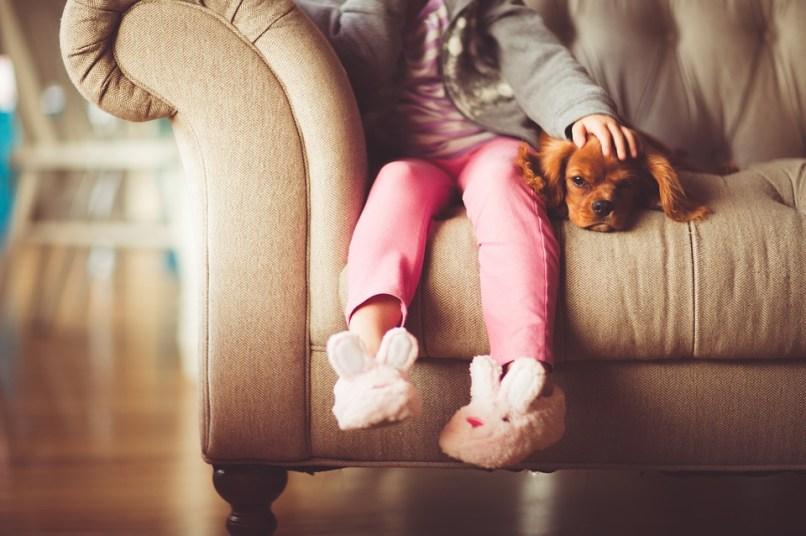 perros de terapia, duelo, muerte, apoyo mascota, mascotas y duelo, apoyo psicologico de animales