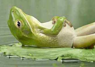 síndrome de la rana hervida