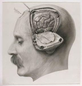 harvey_cushing_drawing_brain