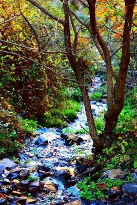 Las hermosas hojas de otoño para reflexionar