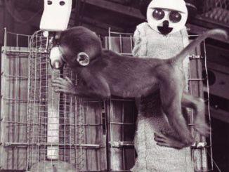 Mono del experimento de Harlow sobre apego