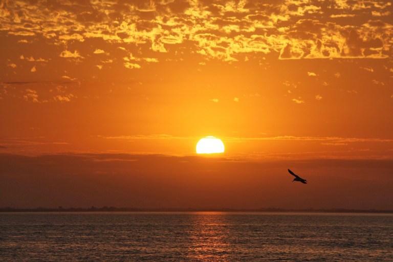 Foto de horizonte al amanecer con sol rojo encima del mar con una gaviota volando en primer plano.