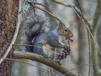 Squirrel ISO 3200
