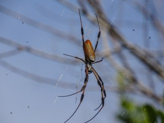 Spider, Shark Valley