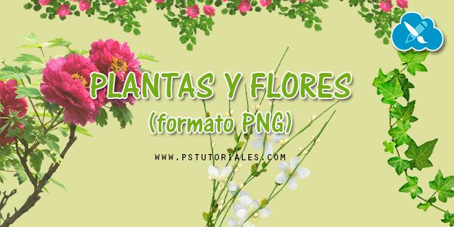 Plantas y flores en PNG