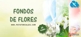 25 fondos de flores + PSD