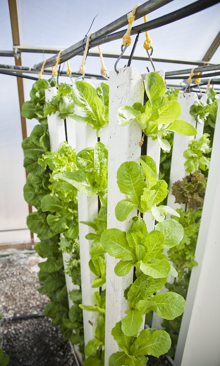 How Vertical Farms Are Disrupting Industries
