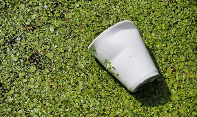 For a Greener Future: Biodegradable Packaging Materials