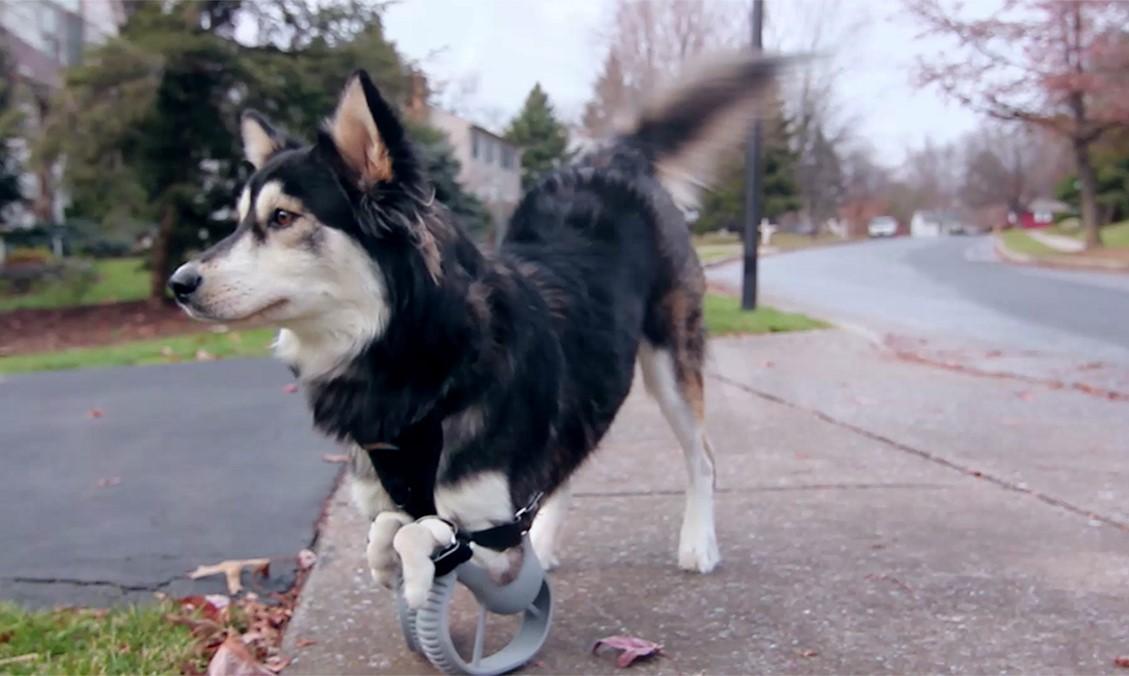 How 3D printing is revolutionizing veterinary medicine