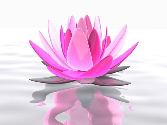 Lotus Flower Symbolism and Spiritual Meaning1