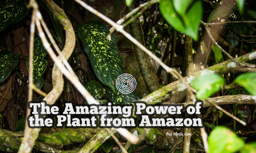 The Amazing Power of the Plant from Amazon 1