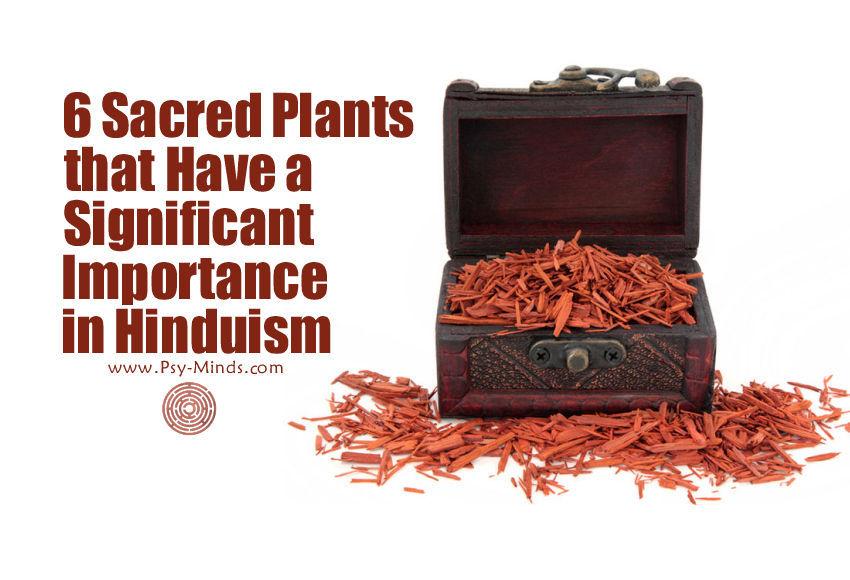 6 Sacred Plants