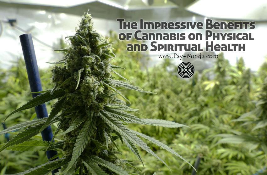 Impressive Benefits of Cannabis
