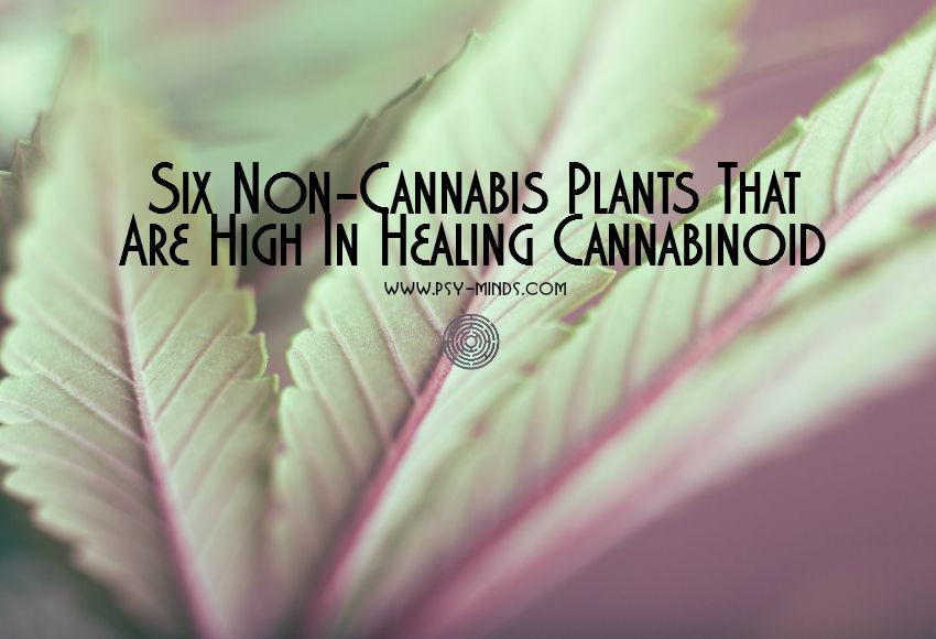 Plants Healing Cannabinoid