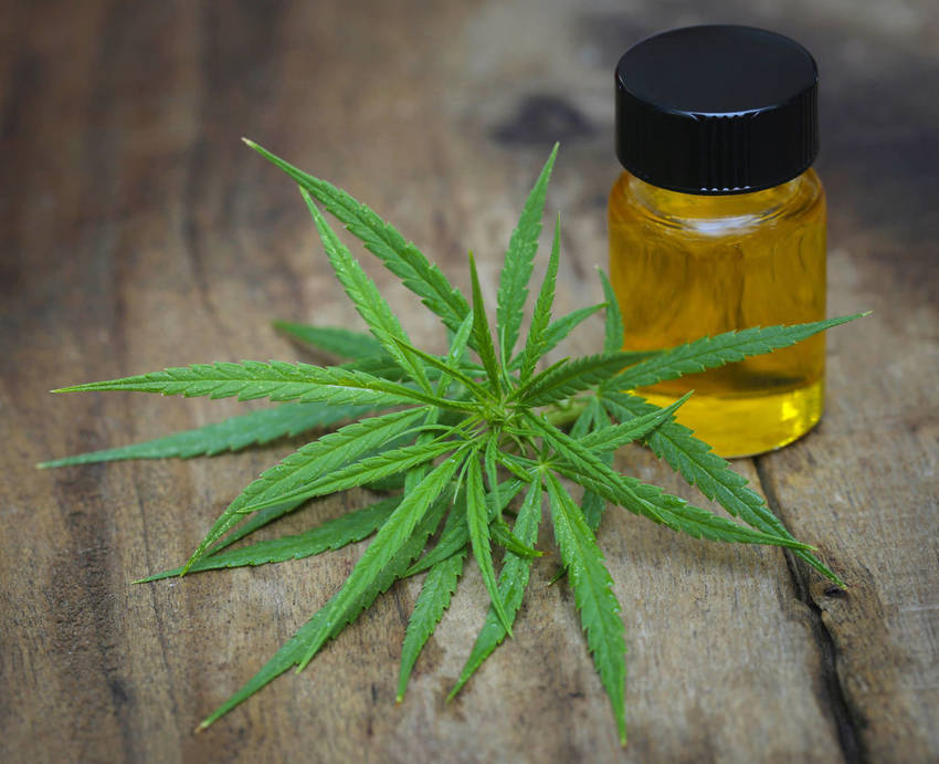 Cannabis Oil for Dogs Everything You Need to Know4