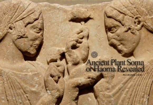 Ancient Plant Soma or Haoma Revealed