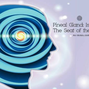 Pineal Gland: Is it Really The Seat of the Soul?