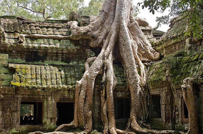 Ta-Prohm-Siem-Reap-Cambodia fairy tale