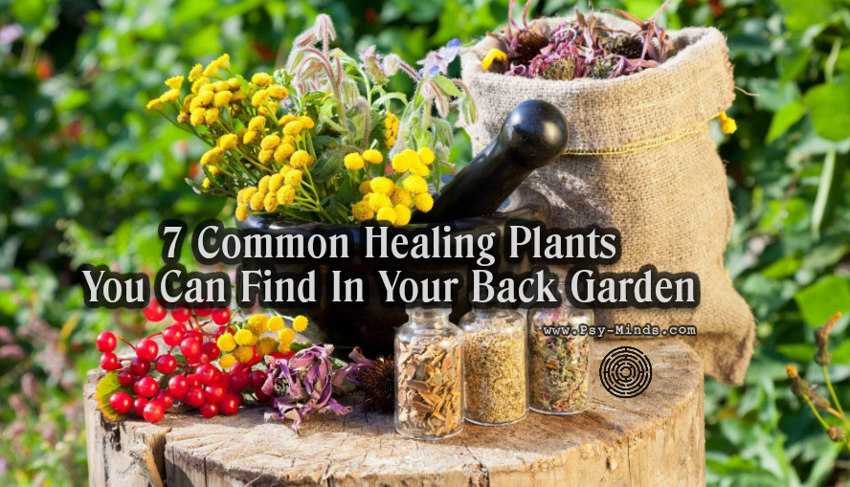7 Common Healing Plants You Can Find In Your Back Garden