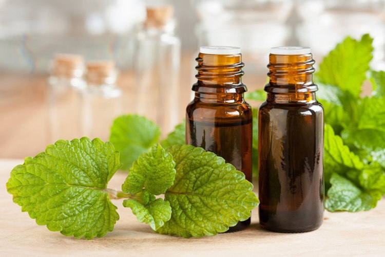 9 Health Benefits of Melissa Officinalis (Lemon Balm) oil