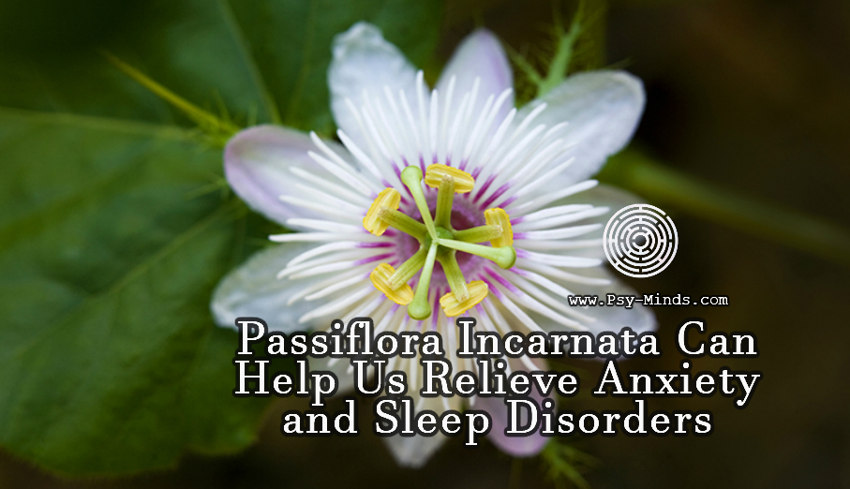 Passiflora Incarnata Can Help Us Relieve Anxiety and Sleep Disorders