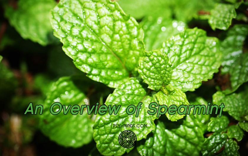 An Overview of Spearmint (Mentha Viridis)