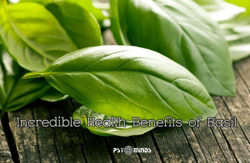 Incredible Health Benefits of Basil