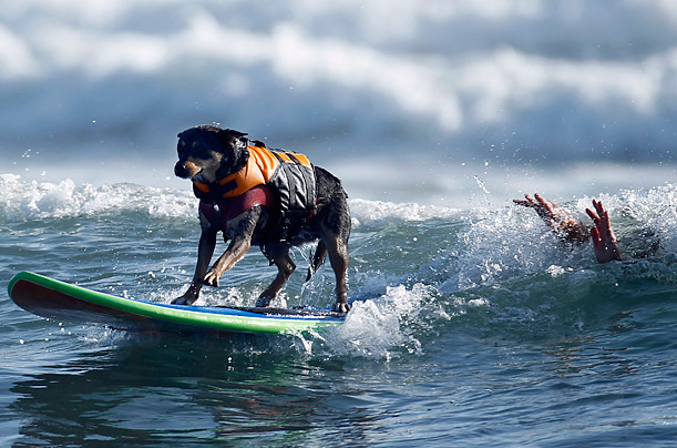 dog-surf-instructor-psych2go