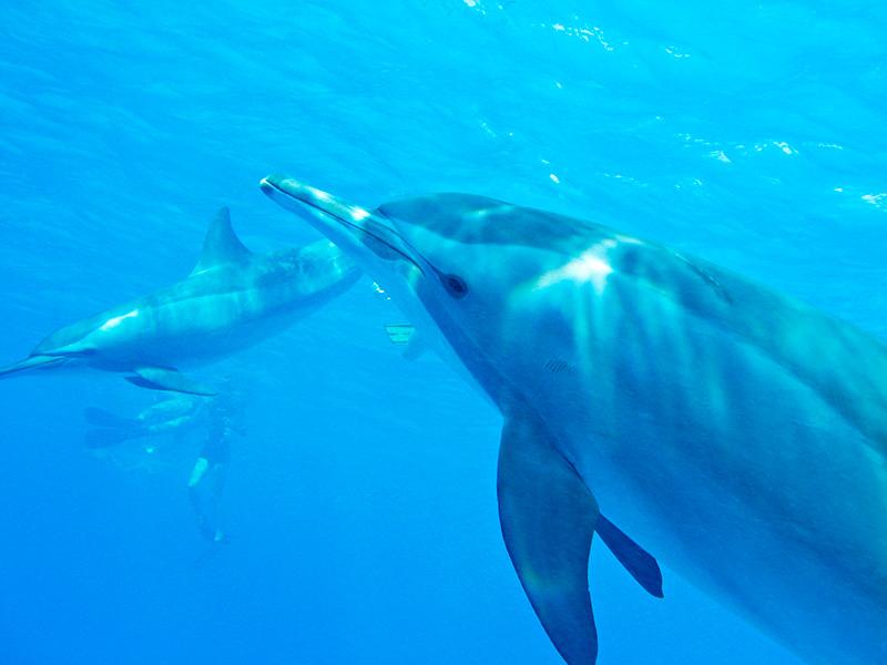 Snorklowanie z delfinami :) Zdjęcie: Wilczy