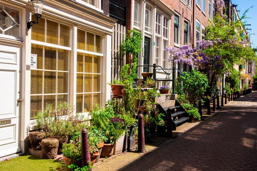 Amsterdam - uliczka pełna zieleni