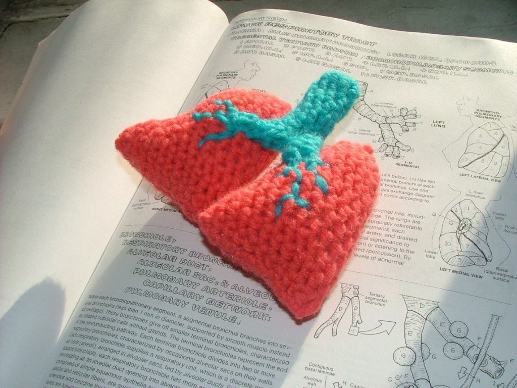 Human lungs crochet pattern plush.