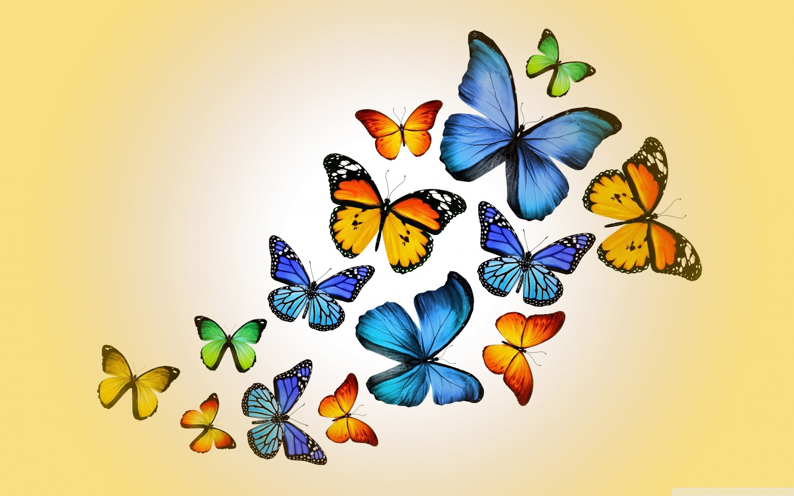 Butterflies 2 Wallpaper 2560 1600 Psychic Readings By Ange