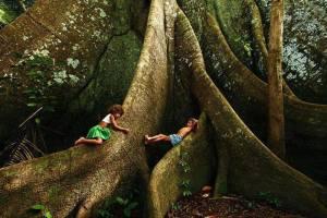 L'arbre qui voulait rester nu
