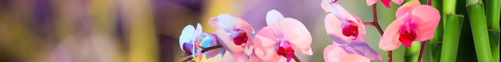 5 exercices de pleine conscience pour augmenter la joie