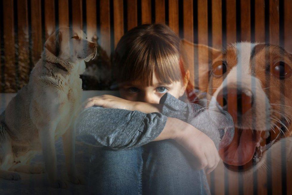 Meisje honden angst Kynofobie